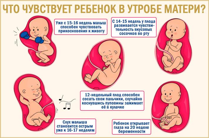 Что чувствует малыш в утробе?