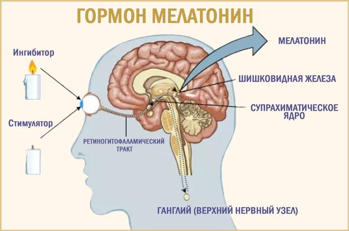 Мелатонин: гормон сна и долгой жизни