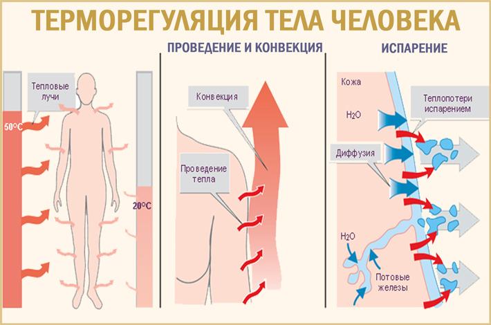 Терморегуляция организма человека