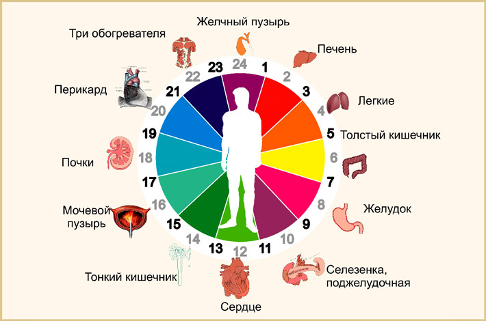 Биоритм организма