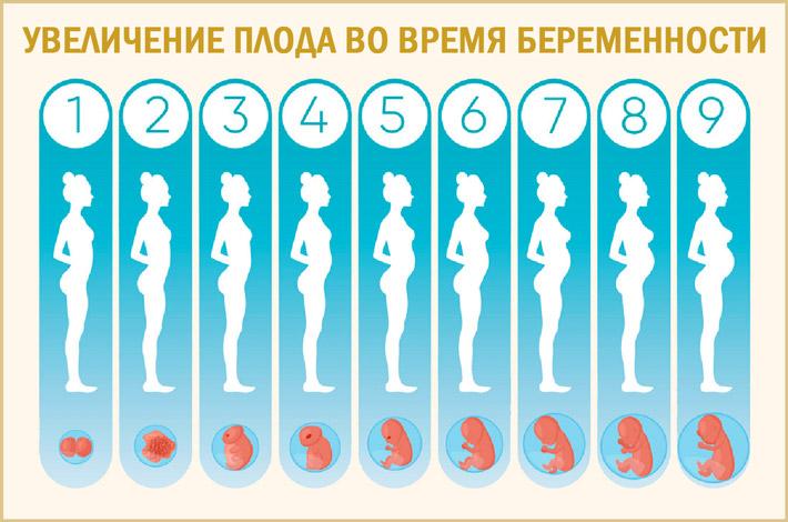 Увеличение плода во время беременности