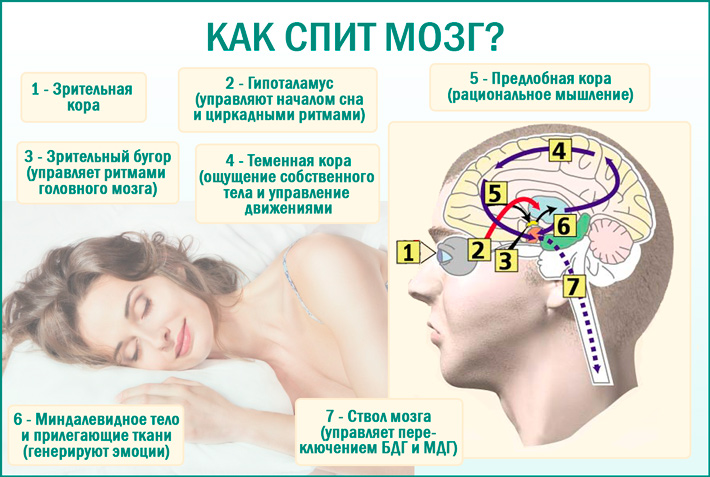 Как работает наш мозг когда мы спим?
